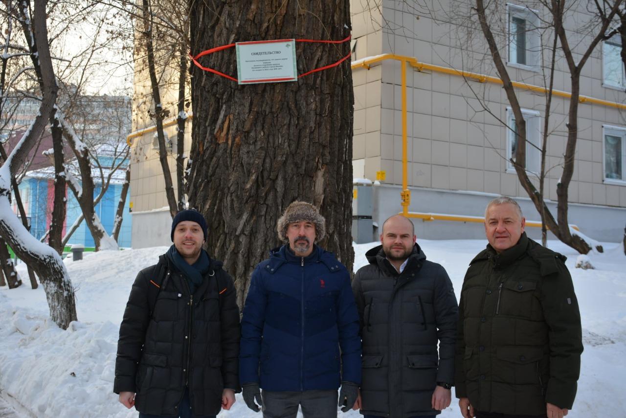 Самое старое дерево Басманного района