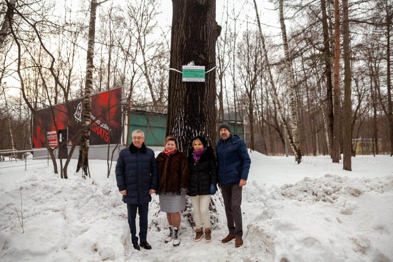 Самое старое дерево района Сокольники